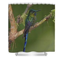 Stylish Hummer... Shower Curtain by Nina Stavlund