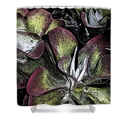 Succulent At Backbone Valley Nursery Shower Curtain by Greg Reed