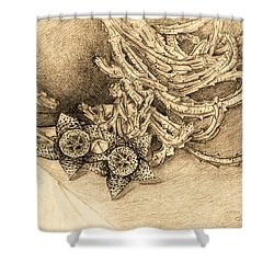 Succulent Flowers Shower Curtain by Judith Chantler