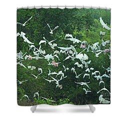 Shower Curtain featuring the photograph Sudden Flight by Lizi Beard-Ward