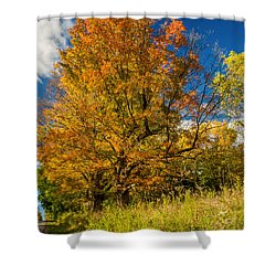 Sugar Maple 3 Shower Curtain by Steve Harrington