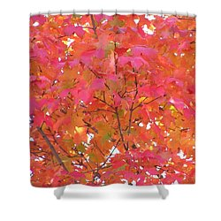 Sugar Maple Shower Curtain by John Wartman
