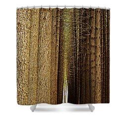 Sugar Pine Walk Shower Curtain