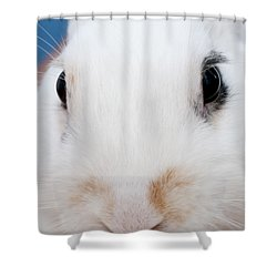 sugar the easter bunny 1 -A curious and cute white rabbit close up Shower Curtain