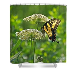 Sultry Summer Day Shower Curtain