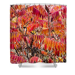 Sumac Shower Curtain by Steven Ralser
