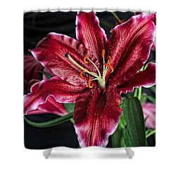 Sumatran Lily Shower Curtain
