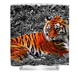 Sumatran Tiger Shower Curtain by Davandra Cribbie