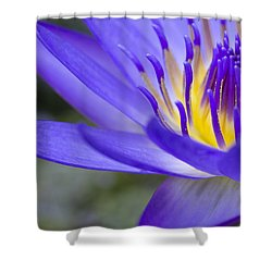 Summer Abundance Shower Curtain by Priya Ghose