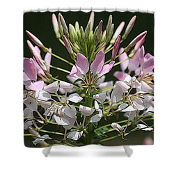 Summer Blossom Shower Curtain by Yvonne Wright