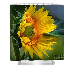 Summer Bonnet Shower Curtain