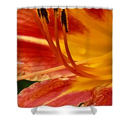 Summer Daylily Shower Curtain by Julie Andel