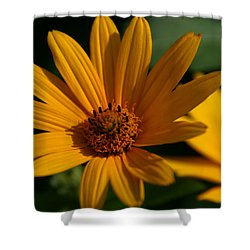 Shower Curtain featuring the photograph Summer Delight by Denyse Duhaime