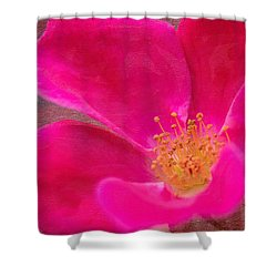 Summer Delight My Pink Rose Shower Curtain