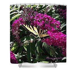 Summer Delights - A Butterfly On The Shower Curtain