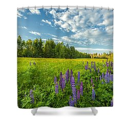 Summer Dream Shower Curtain by Rose-Maries Pictures