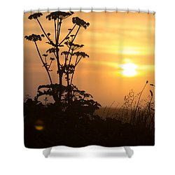 Summer Evening Shower Curtain
