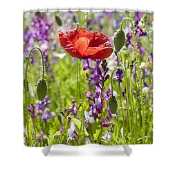 Summer Shower Curtain by Lana Enderle