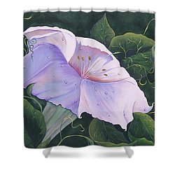 Shower Curtain featuring the painting Morning Glory  by Sharon Duguay