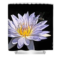 Summer Magic -- Dragonfly On Waterlily On Black Shower Curtain