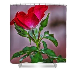 Summer Rose Shower Curtain by Thomas Woolworth
