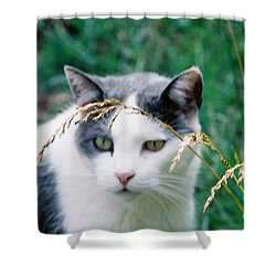 Shower Curtain featuring the photograph Summer Stroll by Donna Brown