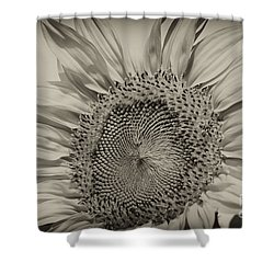 Shower Curtain featuring the photograph Summer Sunflower by Wilma  Birdwell