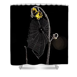 Summers Web Before Sunrise Shower Curtain by Bob Orsillo
