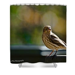 Shower Curtain featuring the photograph Sun Bathing by Robert L Jackson