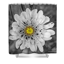 Shower Curtain featuring the photograph Sun Drop by Janice Westerberg