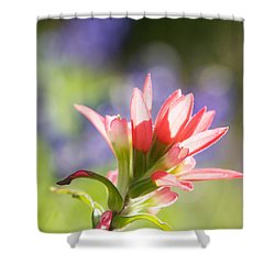 Sun Filled Paintbrush Shower Curtain