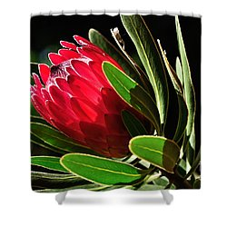 Sun-filled Protea Shower Curtain by Kaye Menner