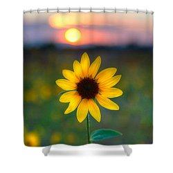 Sun Flower Iv Shower Curtain