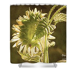 Shower Curtain featuring the photograph Sun-lite Sunflowwer by Donna Brown