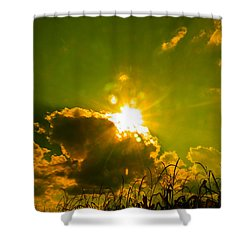Sun Nest Shower Curtain by Nick Kirby