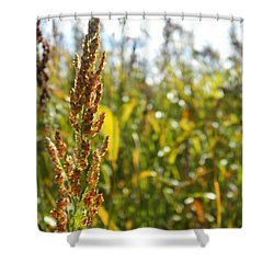 Sun Of Life Shower Curtain by Andrea Anderegg