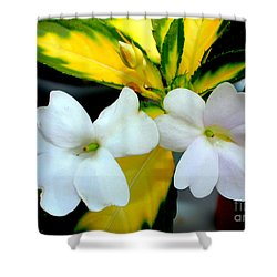 Sun Patiens Spreading White Variagated Shower Curtain