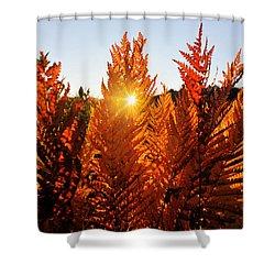 Sun Shining Through Fern Shower Curtain by Dan Friend