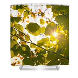 Shower Curtain featuring the photograph Sun Shining Through Leaves by Chevy Fleet