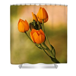 Sun Star Flower Shower Curtain