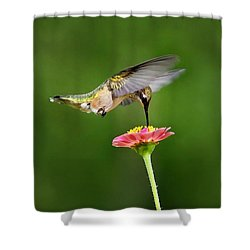 Shower Curtain featuring the photograph Sun Sweet by Christina Rollo
