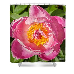Sunbathing Common Garden Peony Shower Curtain