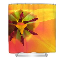 Sunburst 2 Shower Curtain