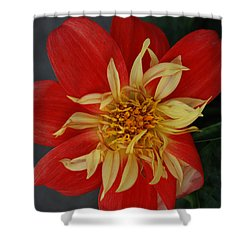 Sunburst Shower Curtain by Carol  Eliassen