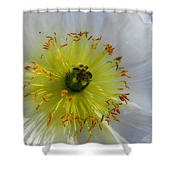 Shower Curtain featuring the photograph Sunburst by Deb Halloran