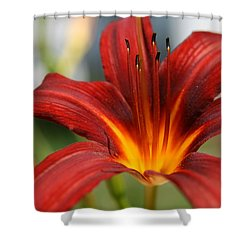 Shower Curtain featuring the photograph Sunburst Lily by Neal Eslinger