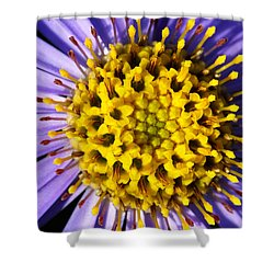 Shower Curtain featuring the photograph Sunburst by Wendy Wilton