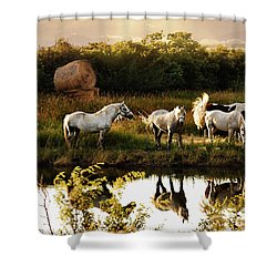 Sundown Shower Curtain by Elaine Manley