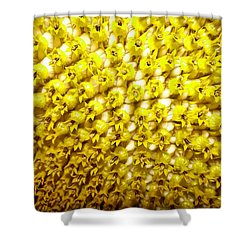 Sunflower 1 Shower Curtain