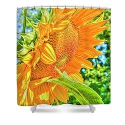 Sunflower 2 Shower Curtain